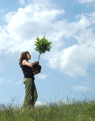 tree planting volunteer_fb