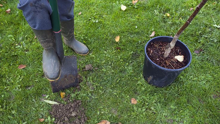 tree planting_shovel